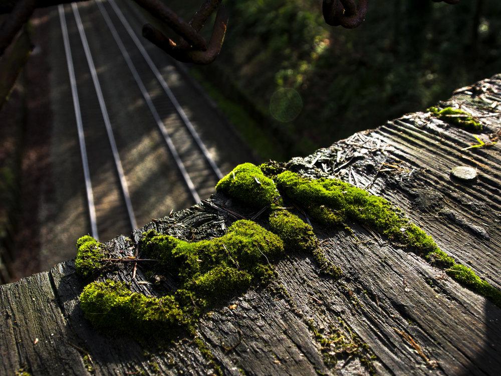 Moss_36.jpg