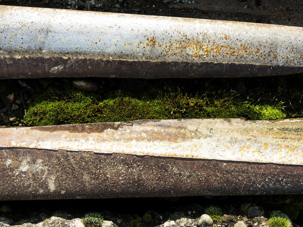 Moss_40.jpg