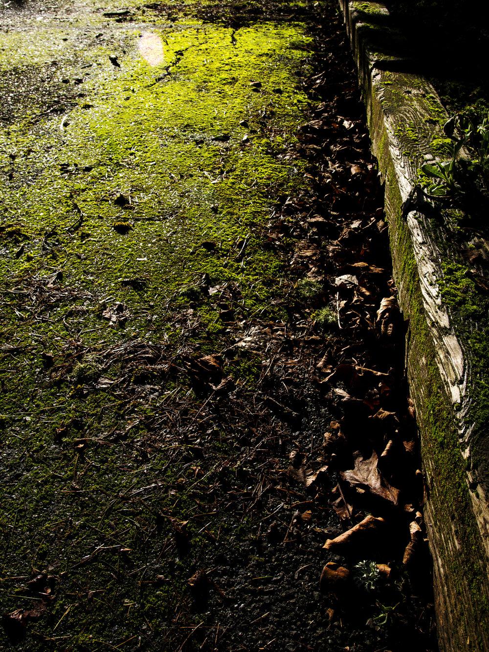 Moss_42.jpg