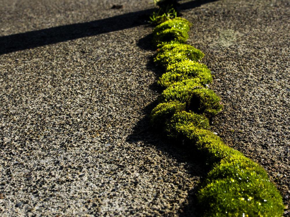 Moss_43.jpg