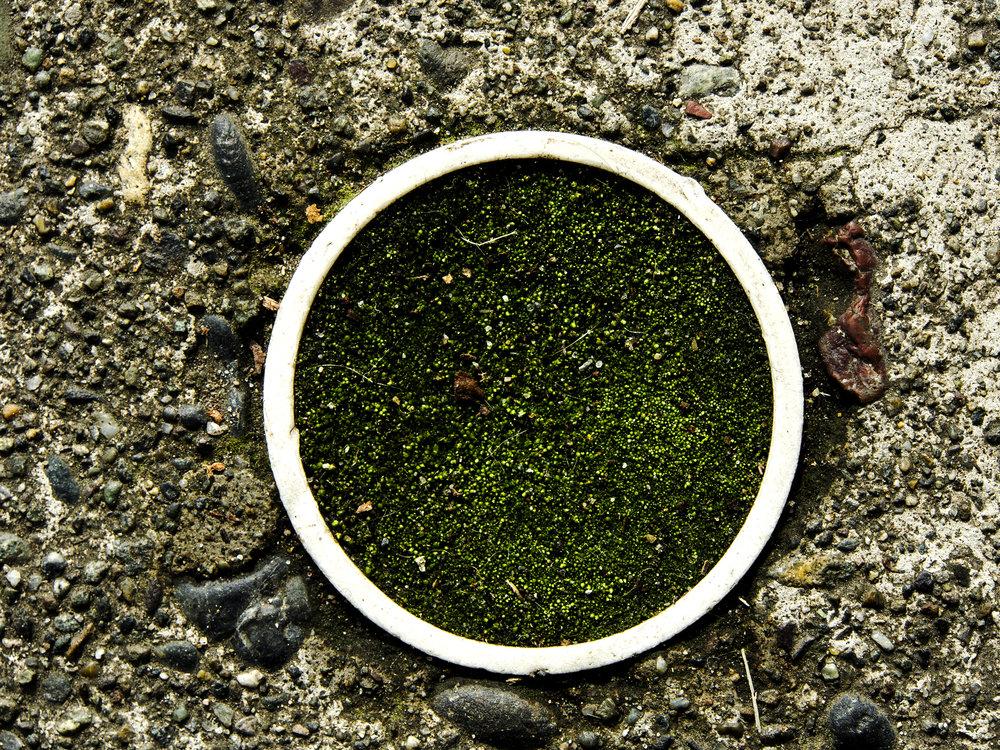 Moss_44.jpg