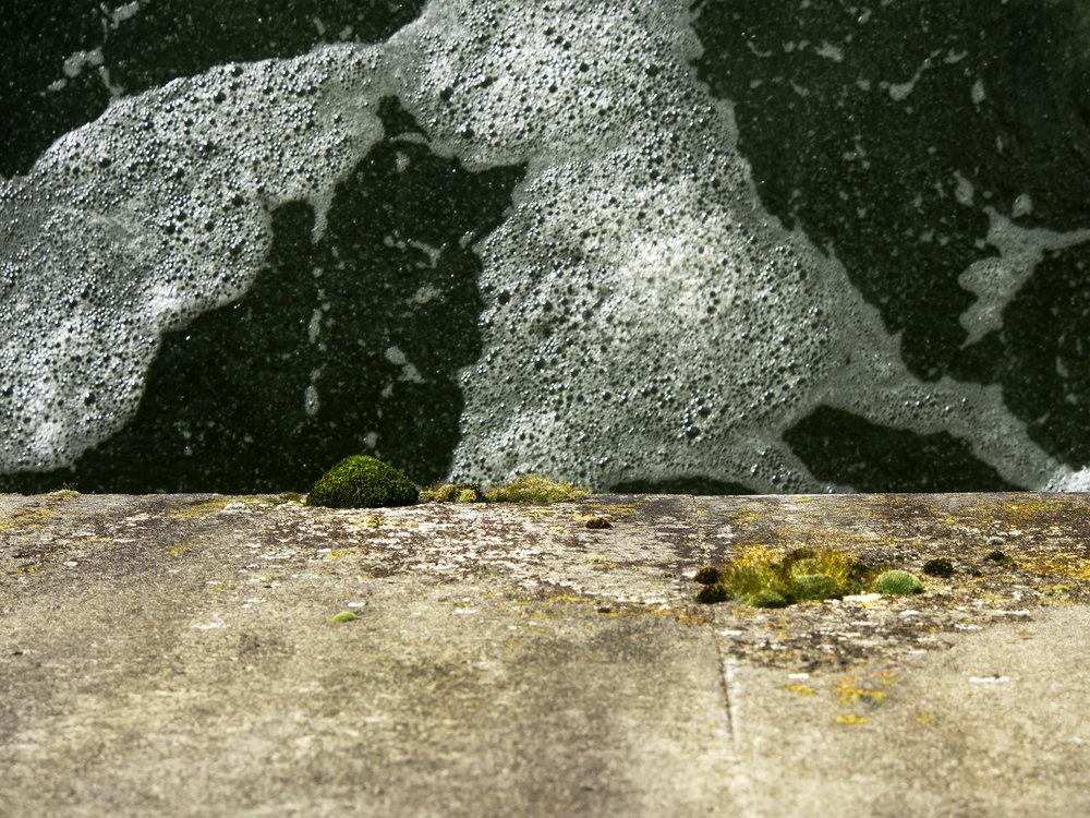 Moss_46.jpg