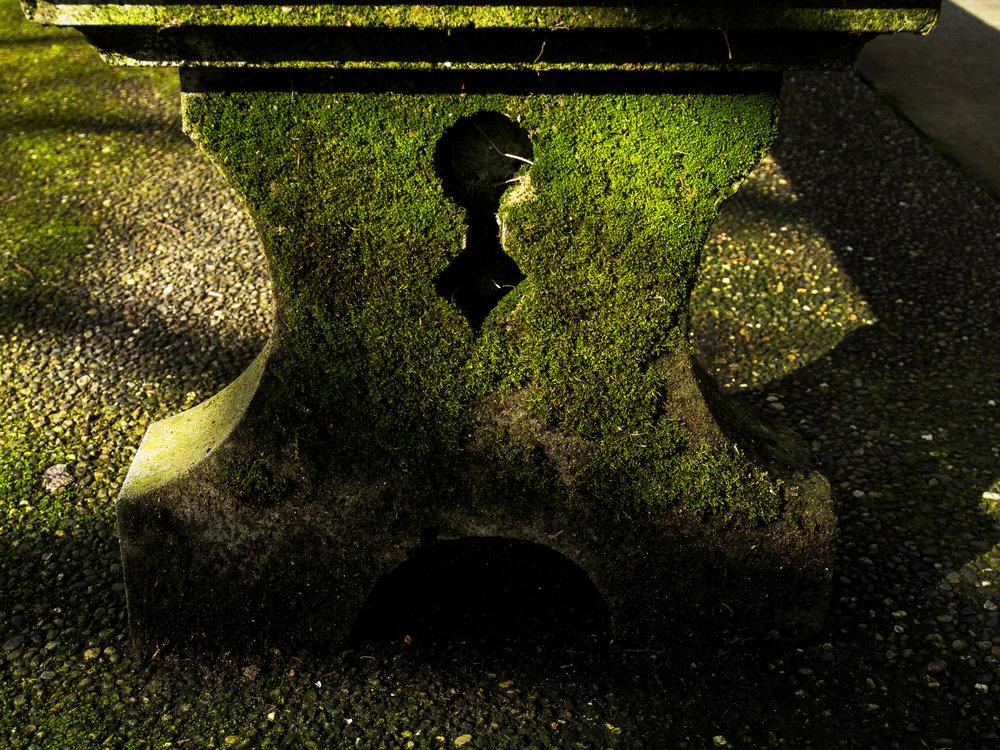 Moss_47.jpg