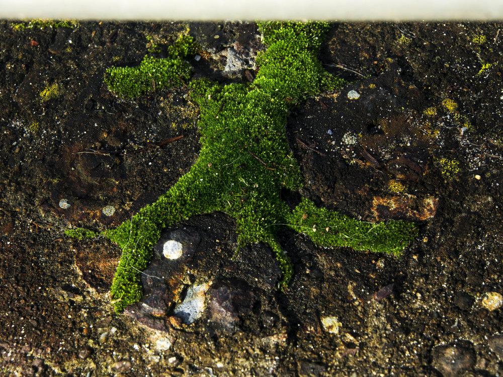 Moss_53.jpg