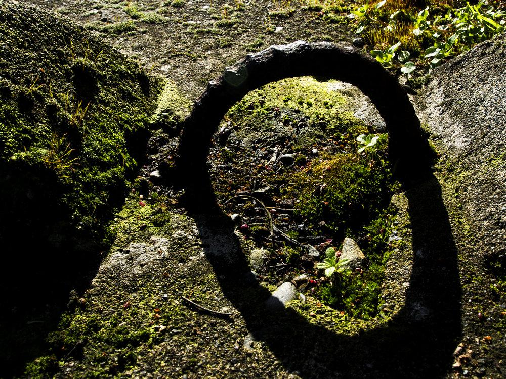 Moss_55.jpg