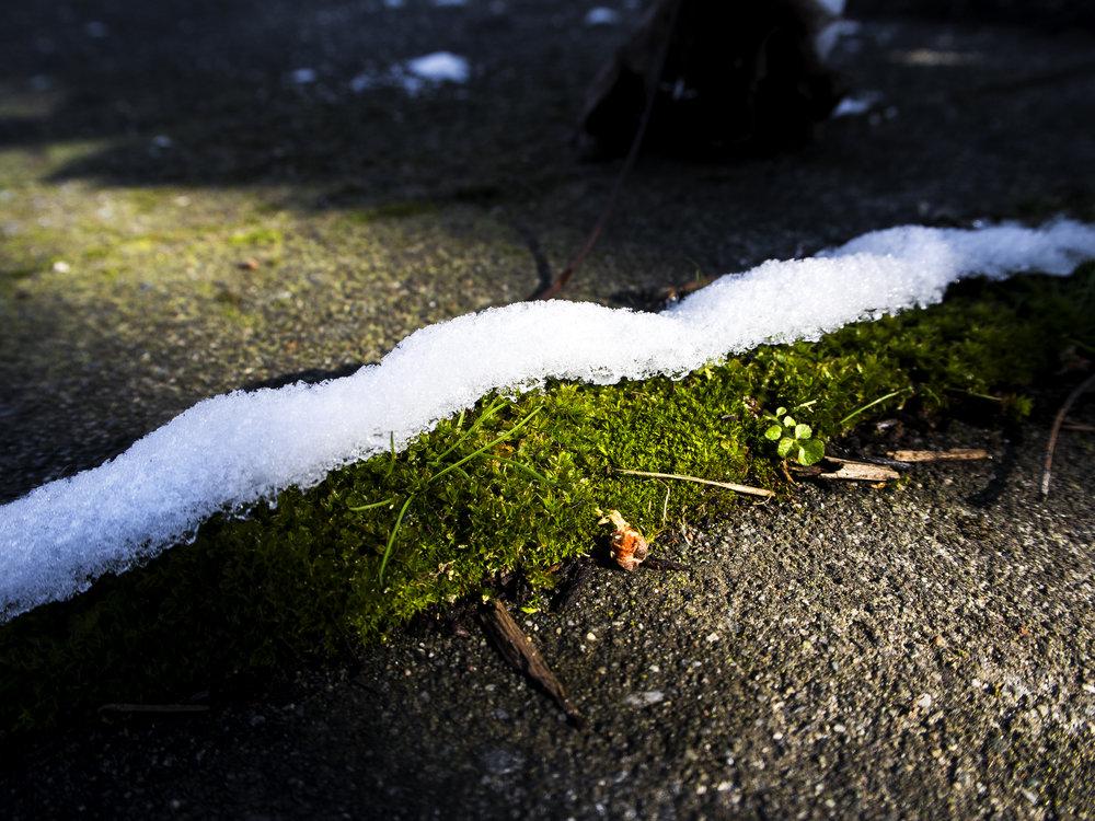 Moss_57.jpg