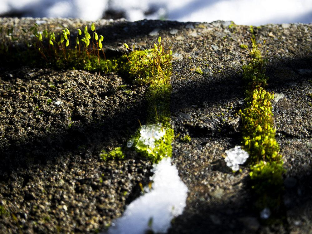 Moss_58.jpg