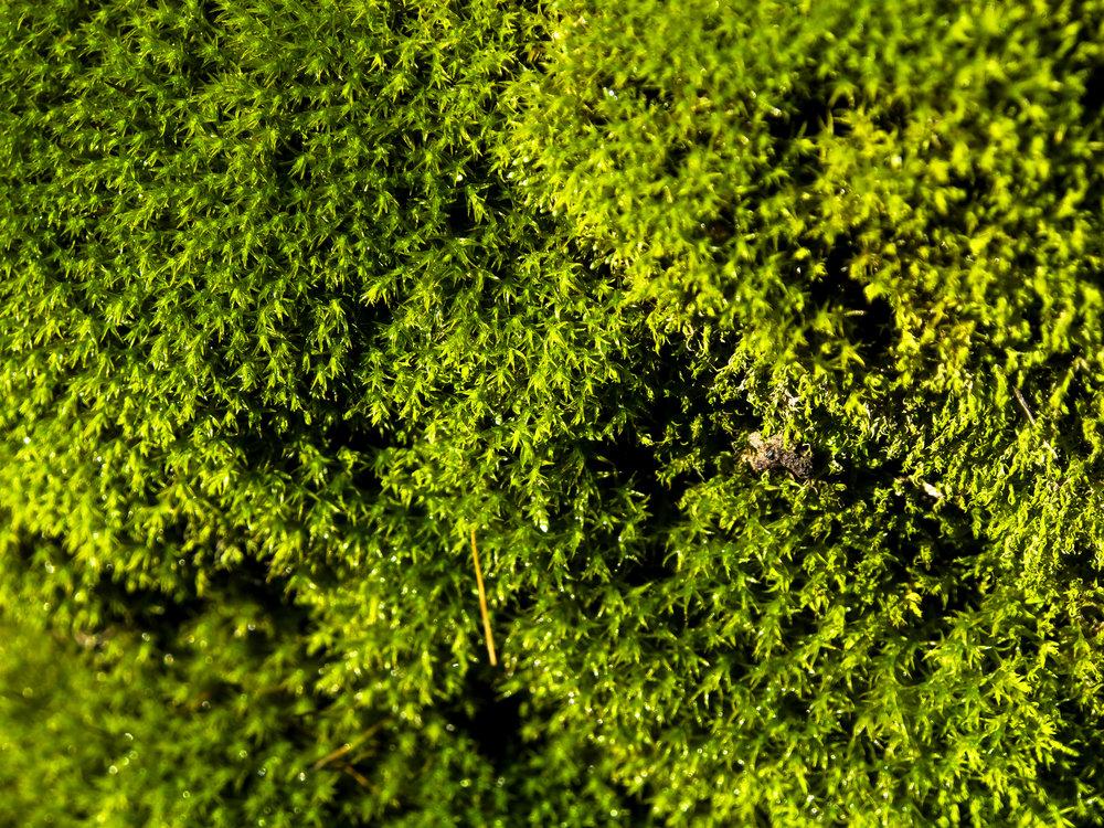 Moss_61.jpg