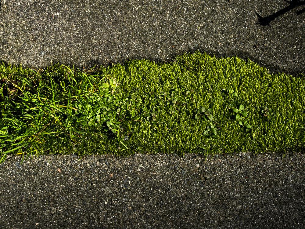 Moss_63.jpg