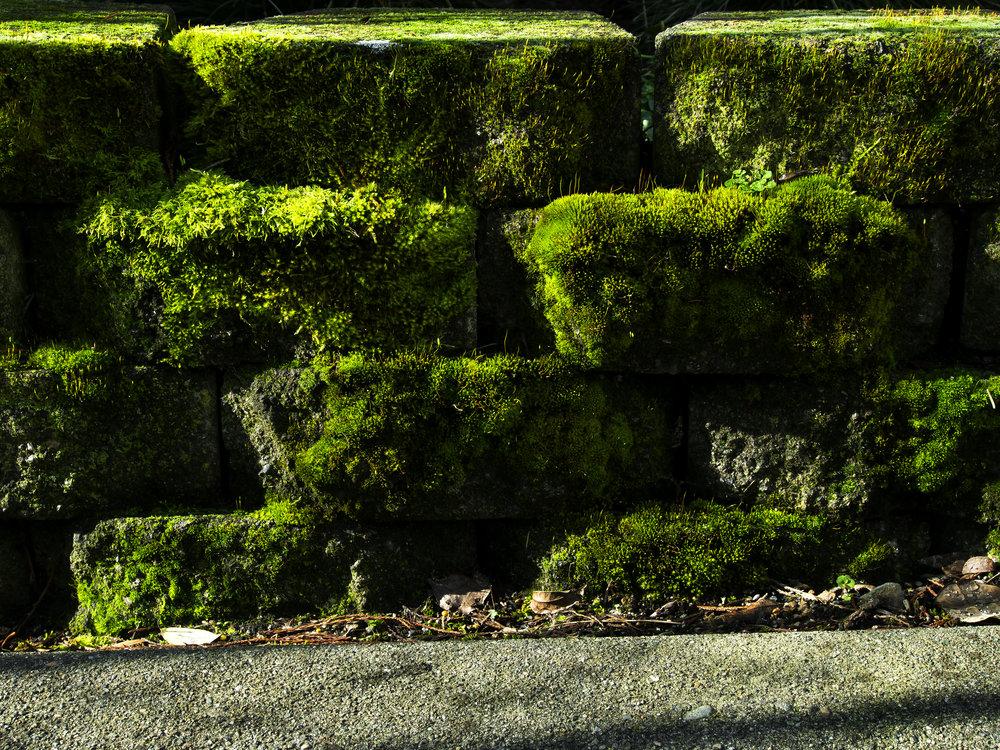 Moss_64.jpg
