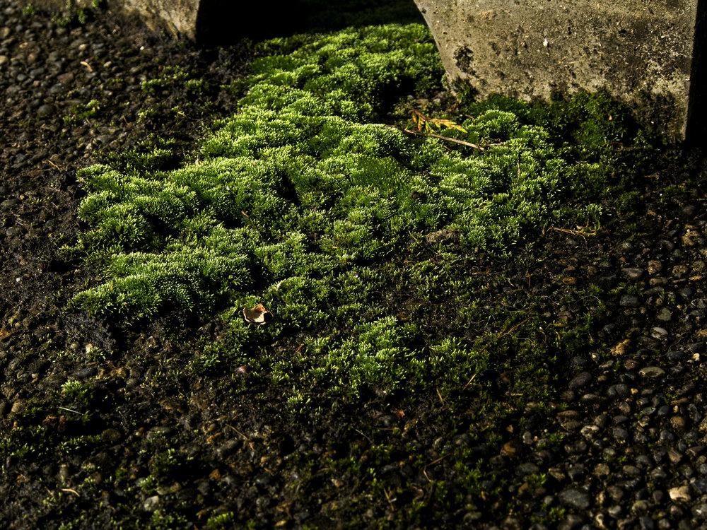 Moss_65.jpg