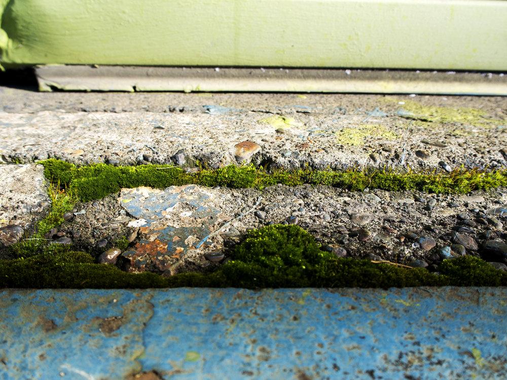 Moss_68.jpg