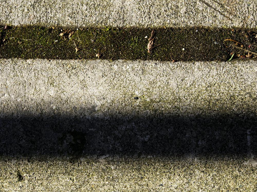 Moss_67-1.jpg