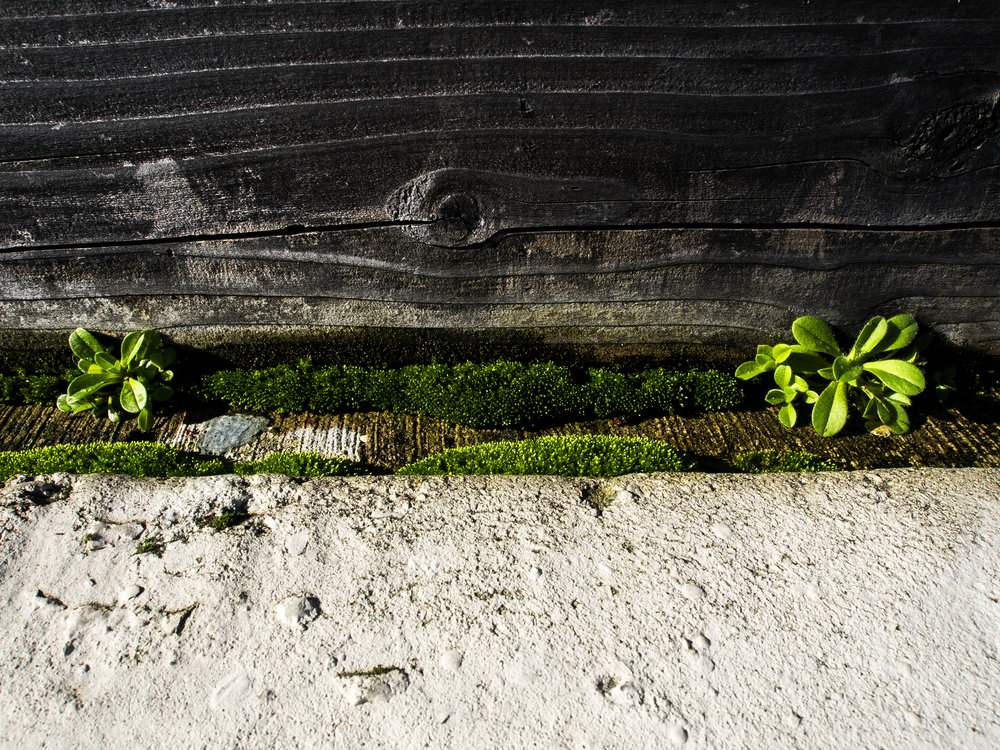Moss_70.jpg