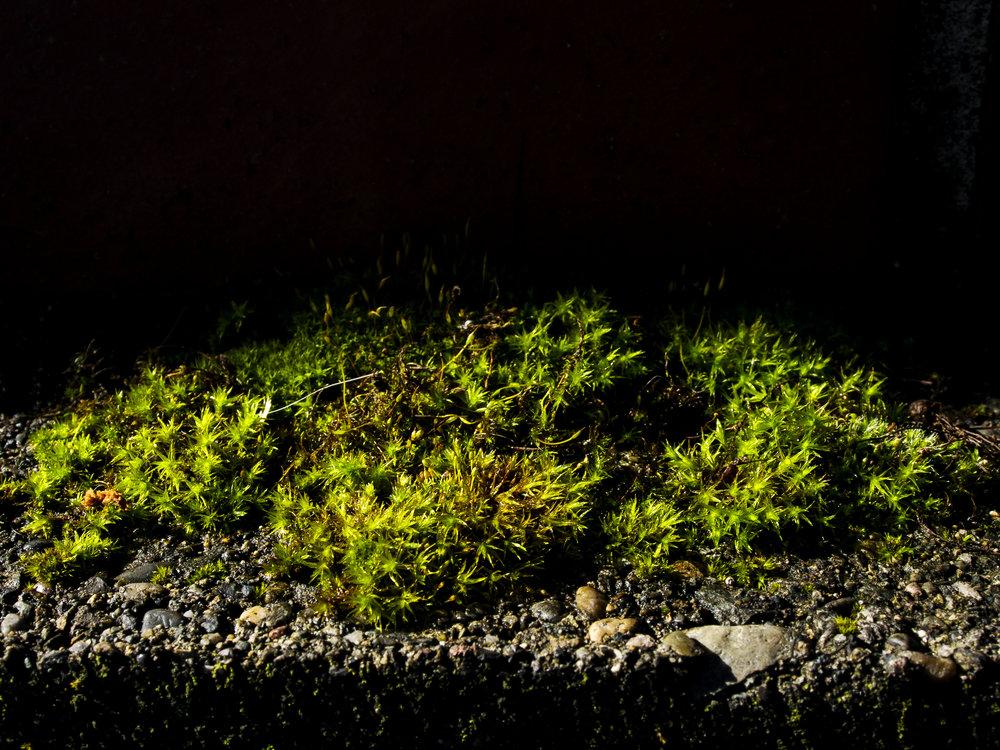 Moss_71.jpg