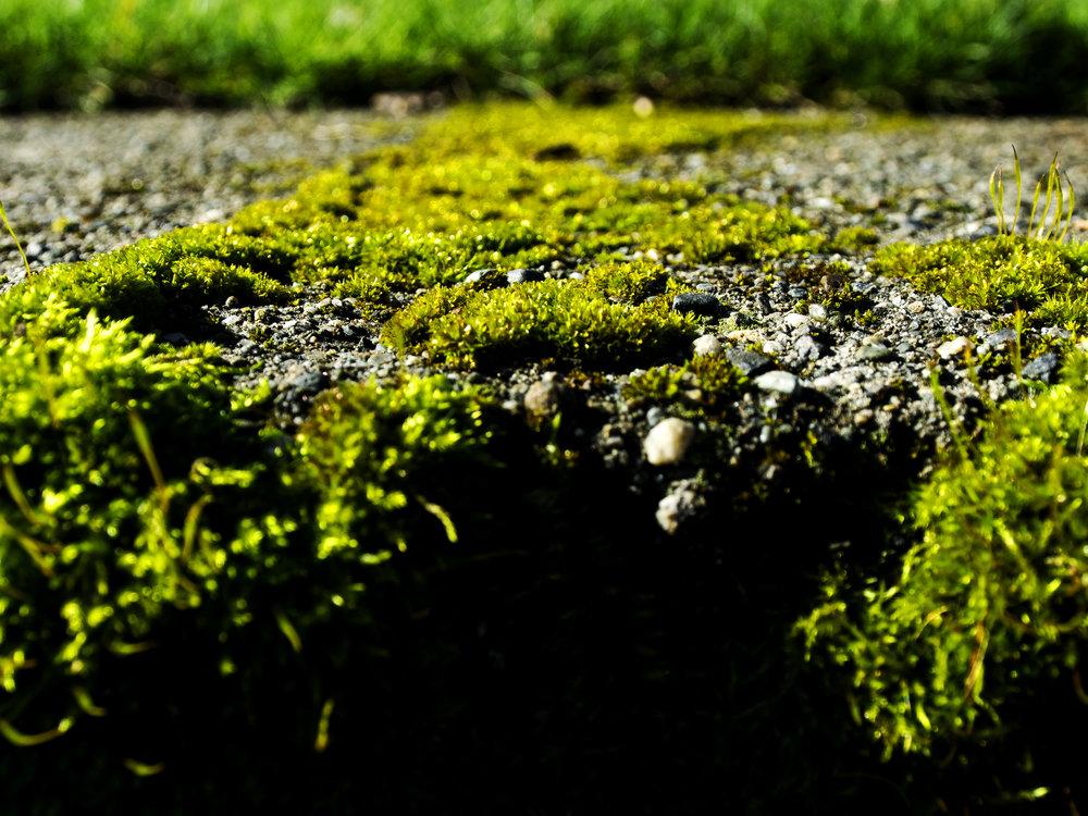 Moss_72.jpg