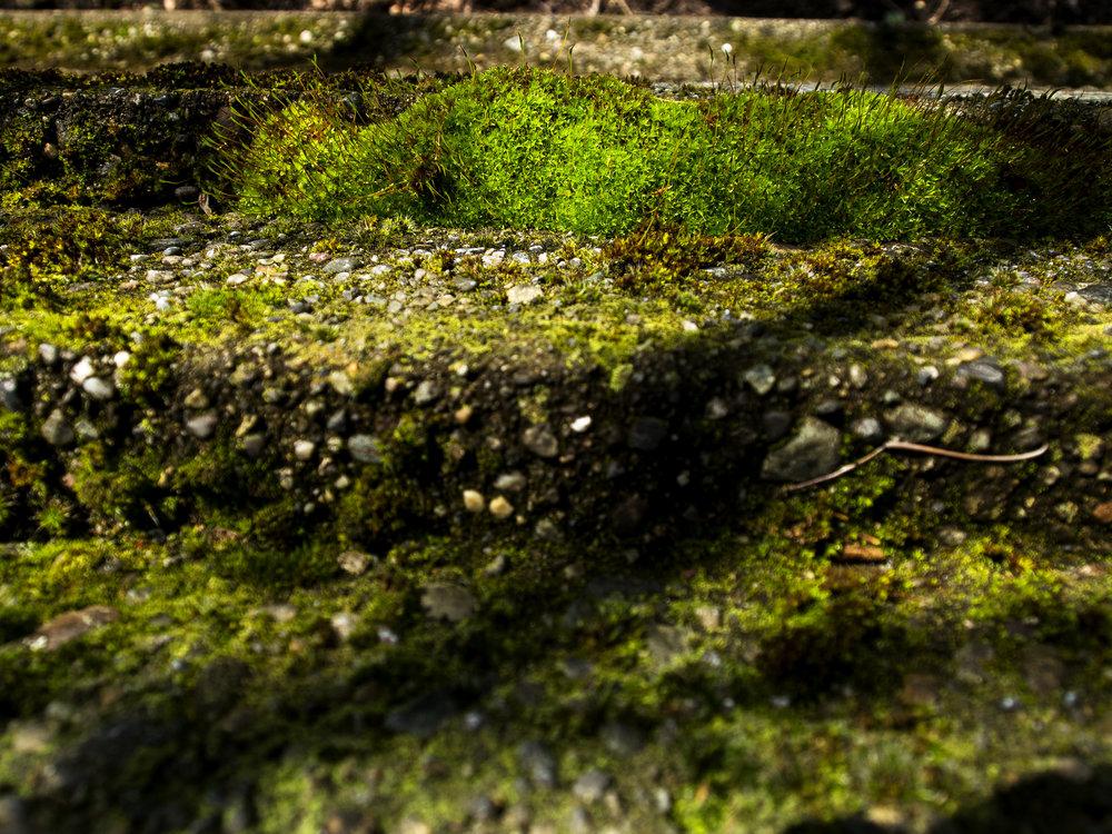 Moss_73.jpg