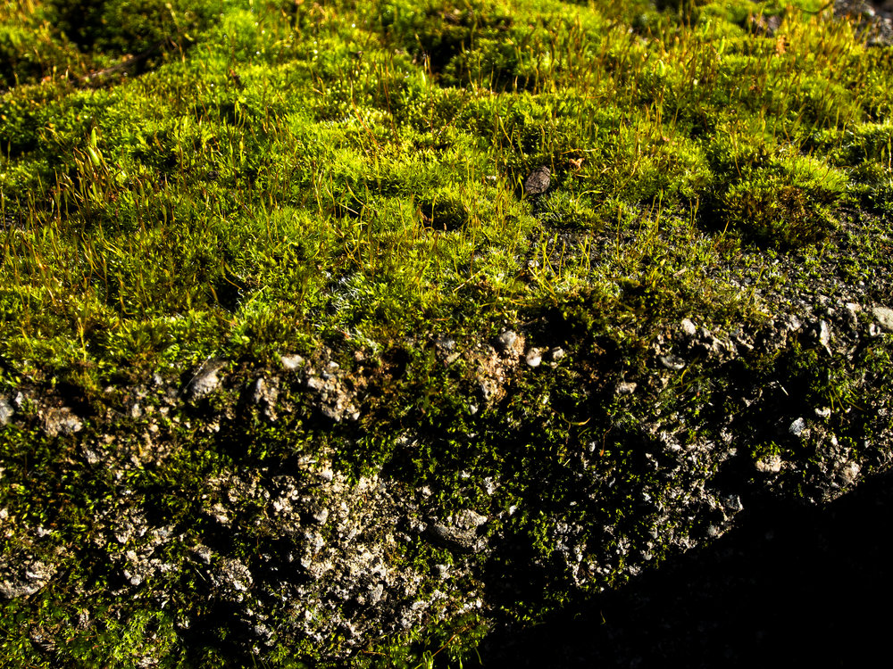 Moss_74.jpg