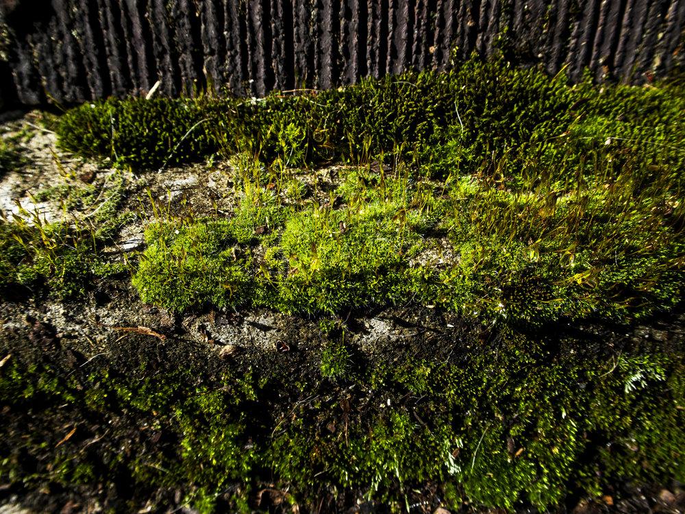 Moss_75.jpg