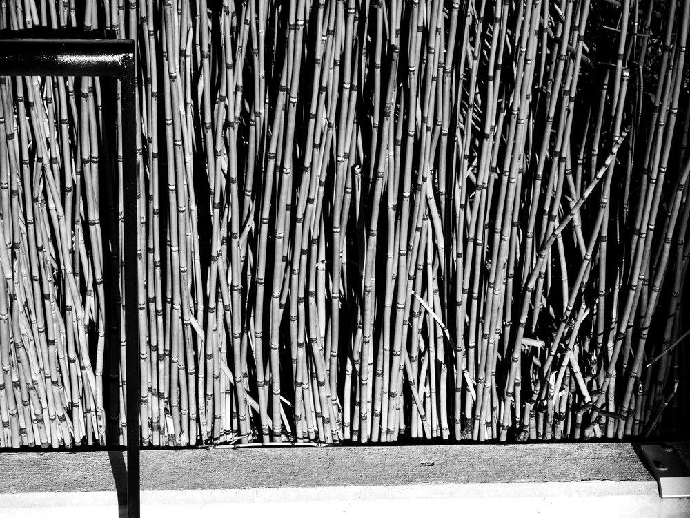 Reeds-BW.jpg
