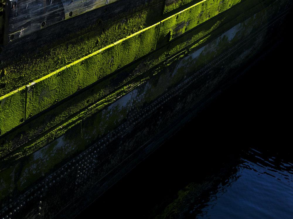Moss_76.jpg