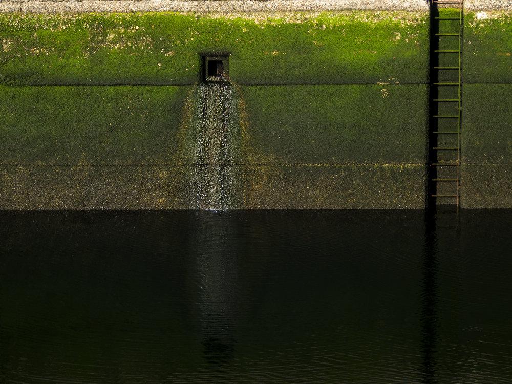 Moss_79.jpg