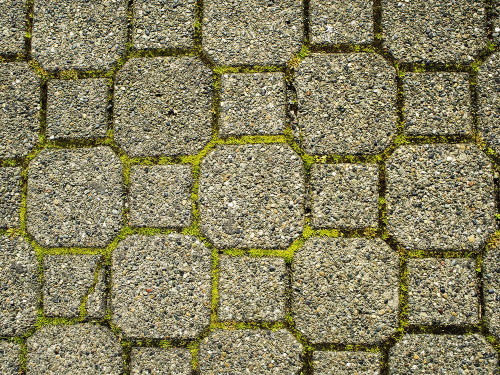 Moss_81-1.jpg