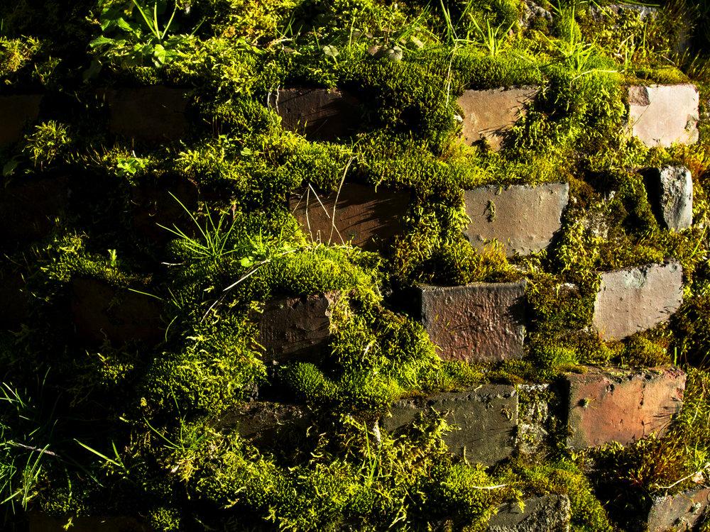 Moss_82.jpg