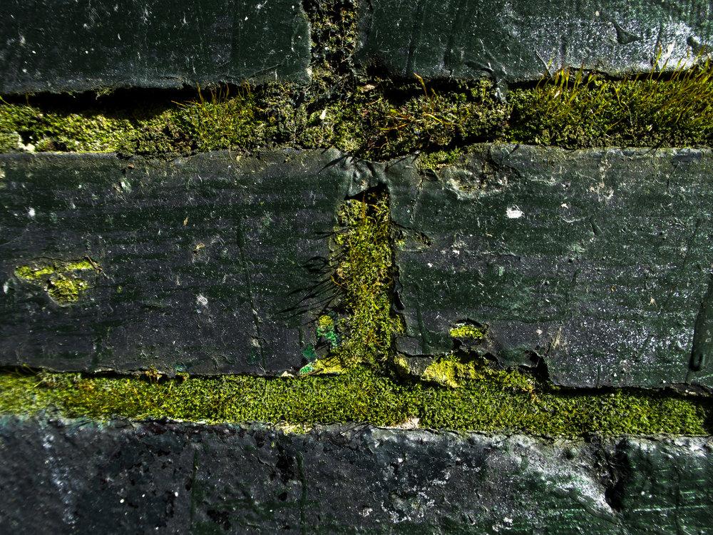 Moss_84.jpg