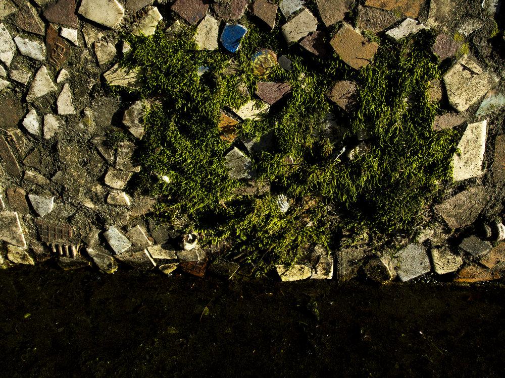 Moss_85.jpg