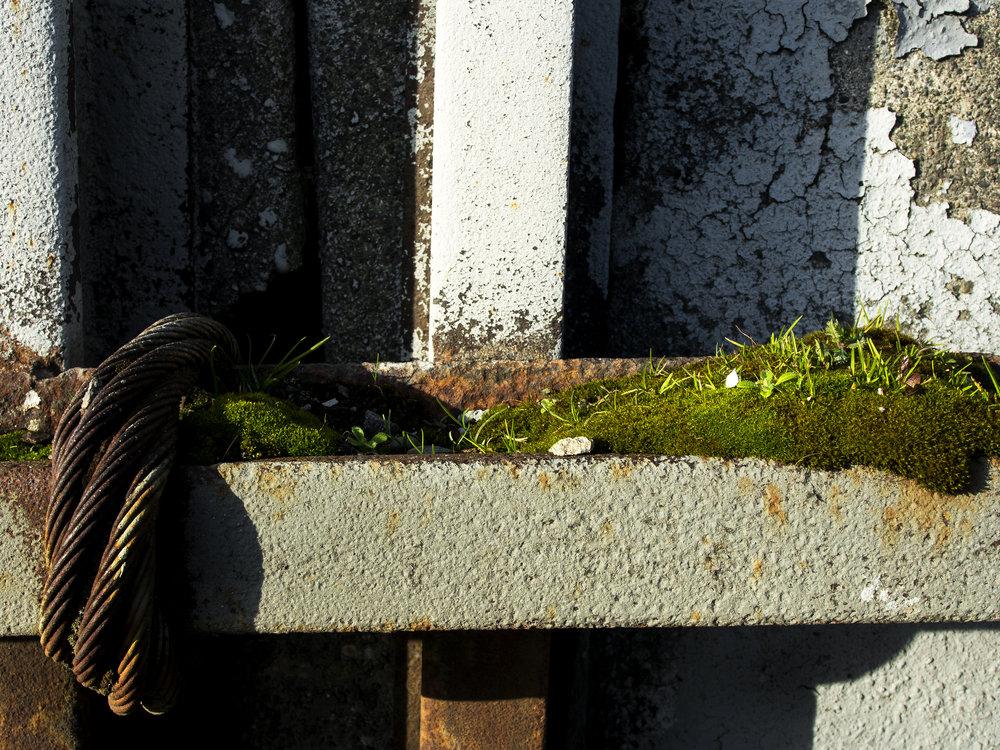 Moss_89.jpg