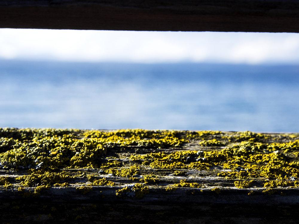 Moss_91.jpg
