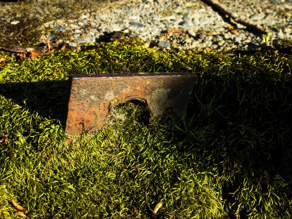 Moss_90.jpg