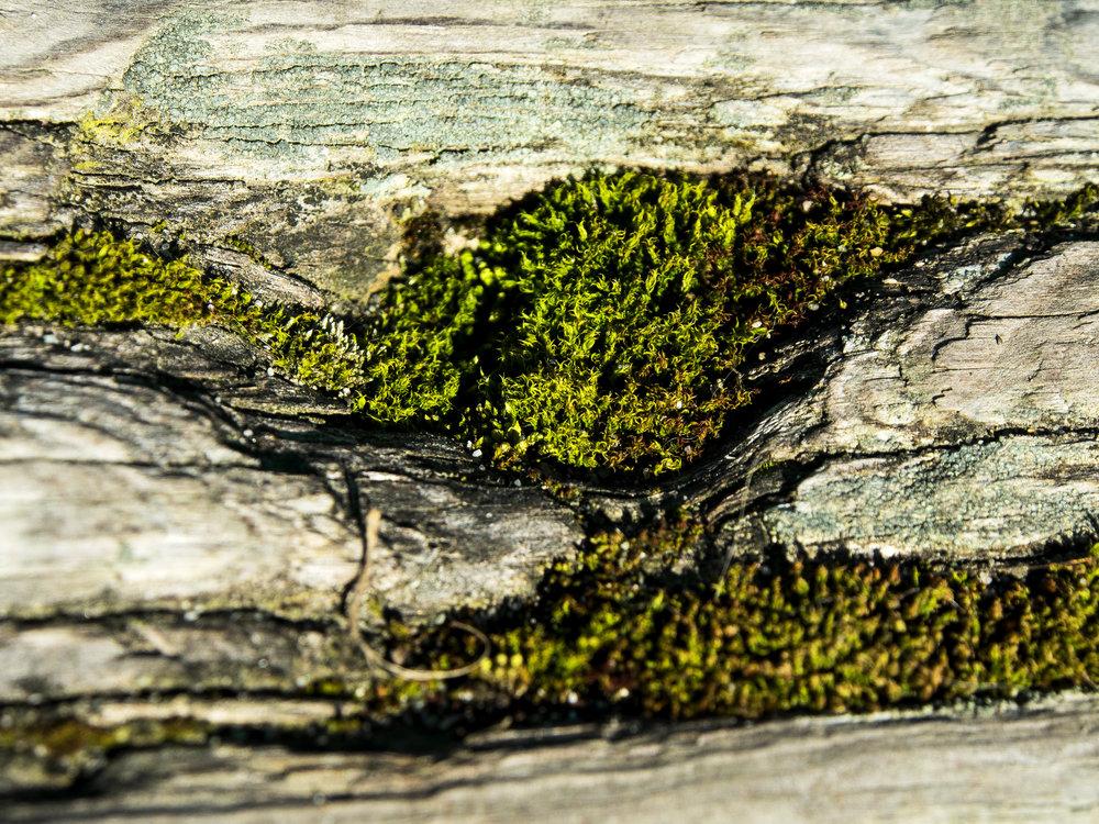 Moss_99.jpg