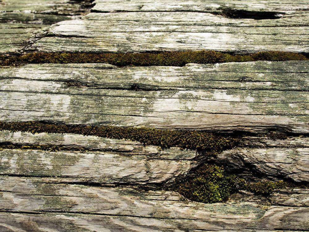 Moss_100.jpg