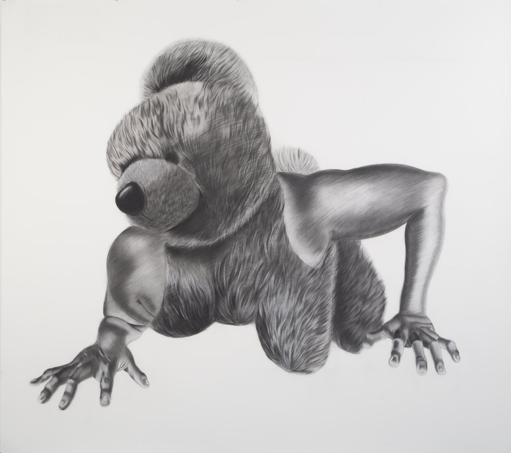 Criatura #2, 65 x 72.5 inches. Charcoal on paper.