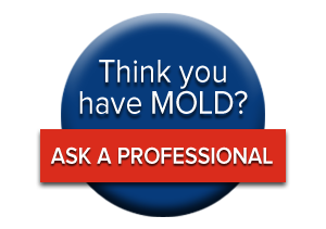 Mold Testing.png