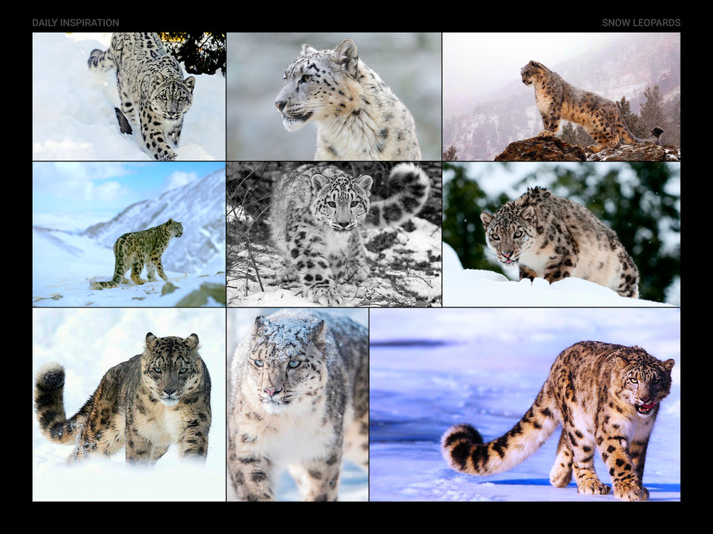 Snow-Leopards.jpg