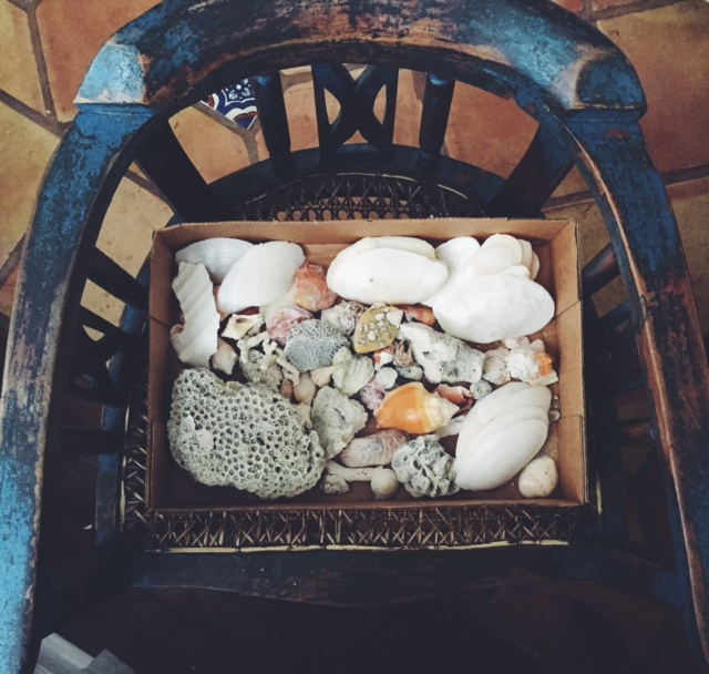 A box of shells souvenirs I packed up for the move to Dallas