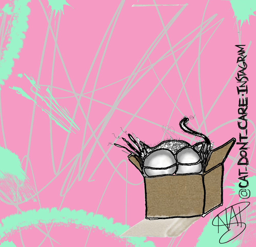 cats boxes 3 hairs scribble3b.jpg