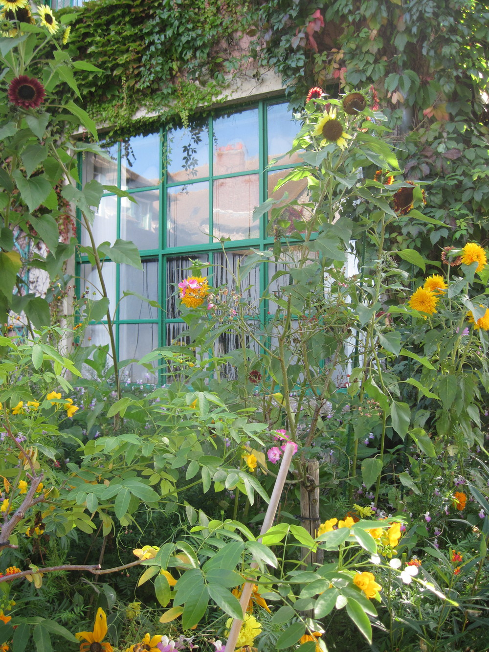 Monets house w: sunflowers.JPG