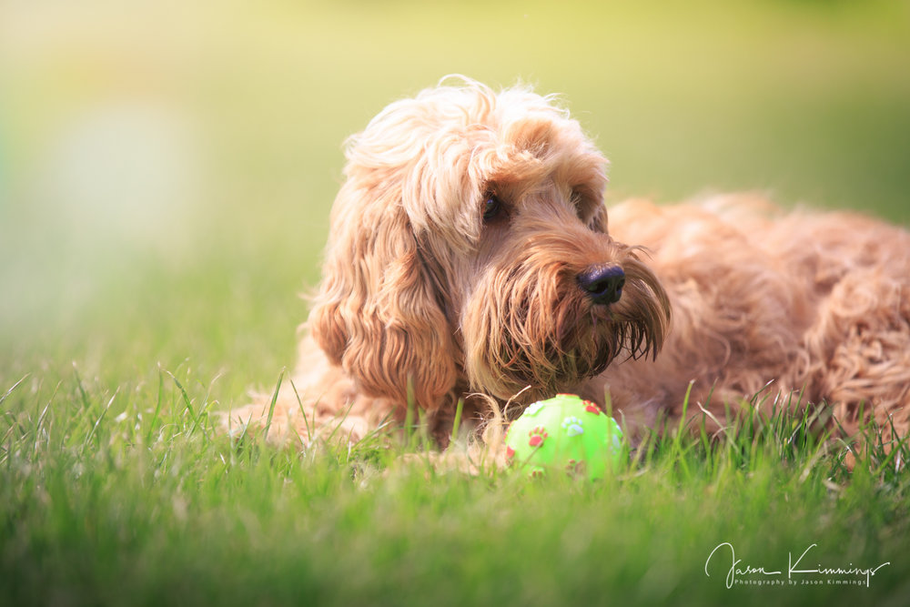 Dog-pet-photography-edinburgh-glasgow-west-lothian-2.jpg