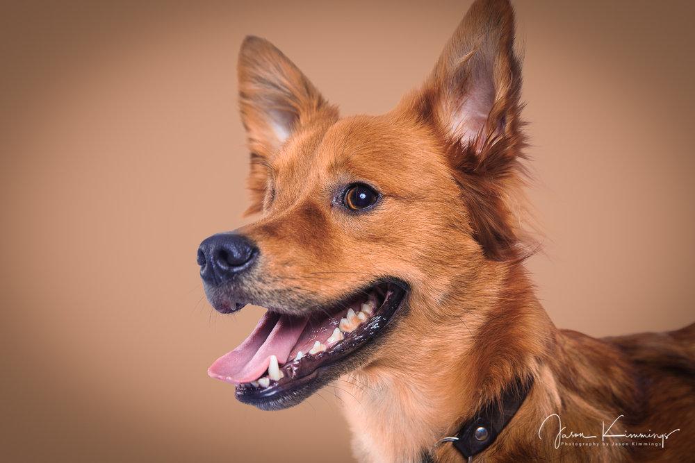 Dog-portrait-photography-edinurgh-glasgow-west-lothian-2.jpg