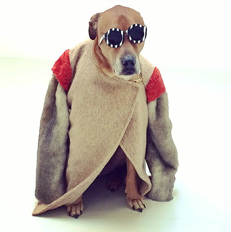 #Montymodeldog Glasses: Sydney, Coat: Kate Sylvester