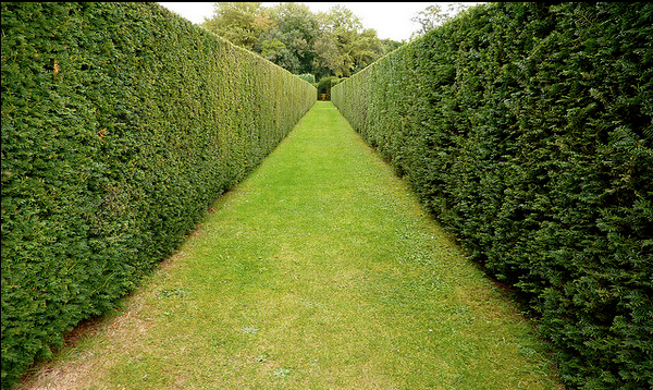 High Quality Hedge Trimming.