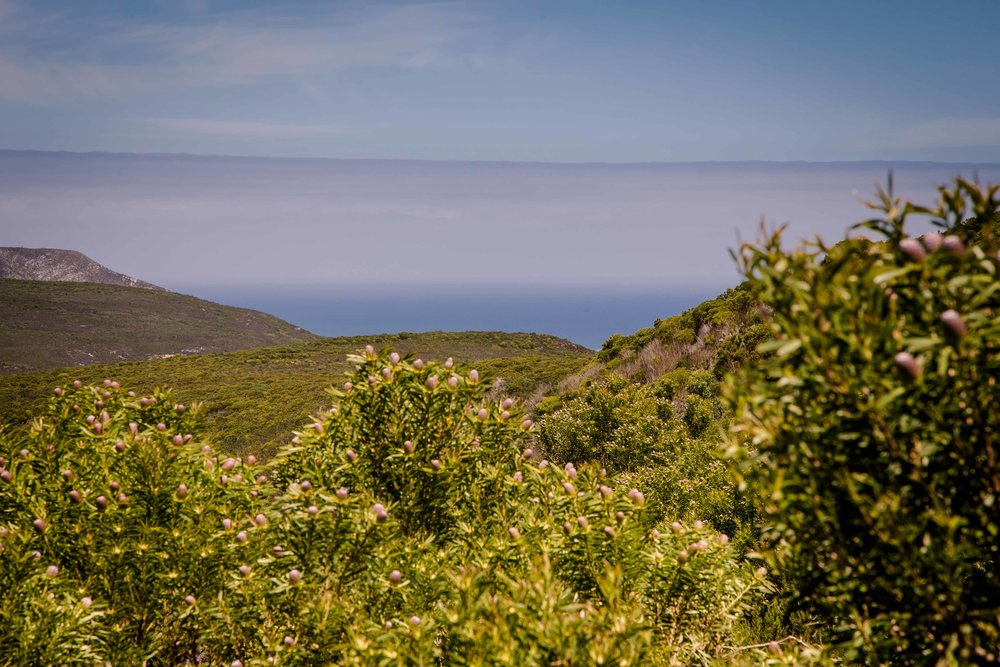 fynbos day4 (25 of 44).jpg