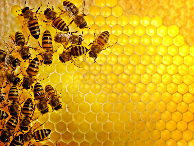 bee term 4 lessons tes teach