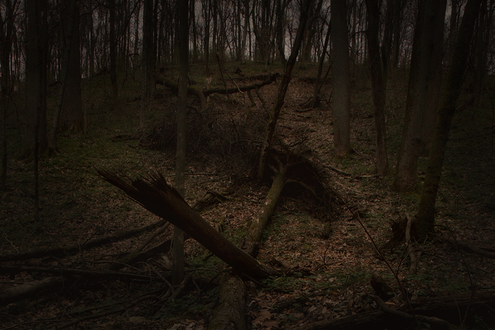 """...like a dark, unmetered poetry of woods."""