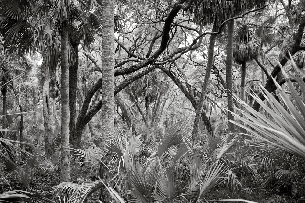 Forest-4786BWTonedLoRes.jpg
