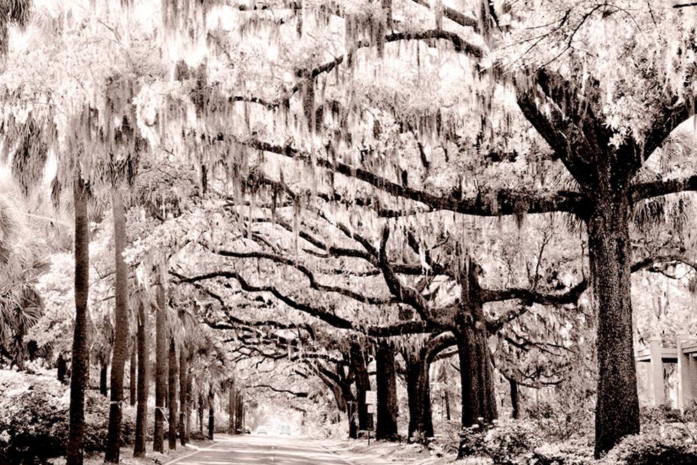 9 Savannah-Canopy-Rev-2-SLE_WEB.jpg